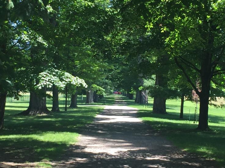 2017-07-04 Hyde Park FDR 31