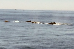 2017-07-16 Gloucester Whale Watching 32