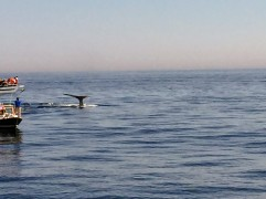 2017-07-16 Gloucester Whale Watching 42