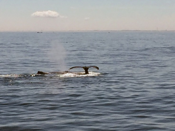 2017-07-16 Gloucester Whale Watching 49