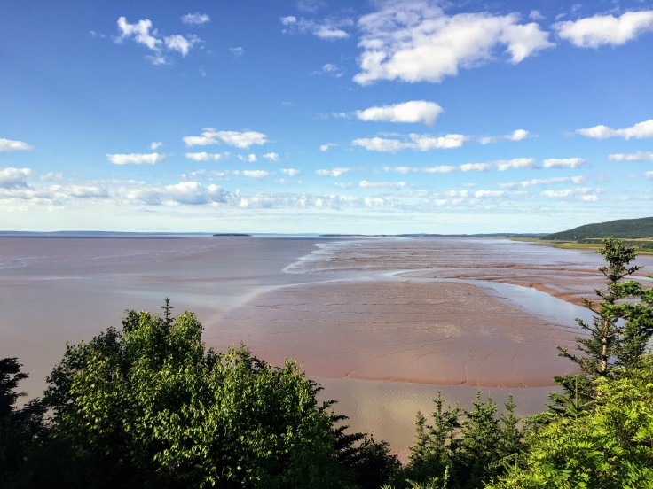 2017-07-29 Hopewell Rocks 08