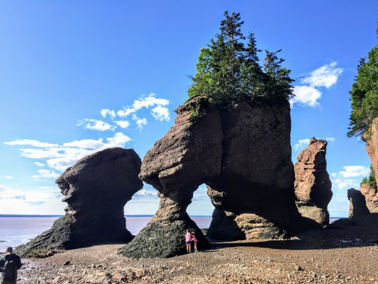 2017-07-29 Hopewell Rocks 12