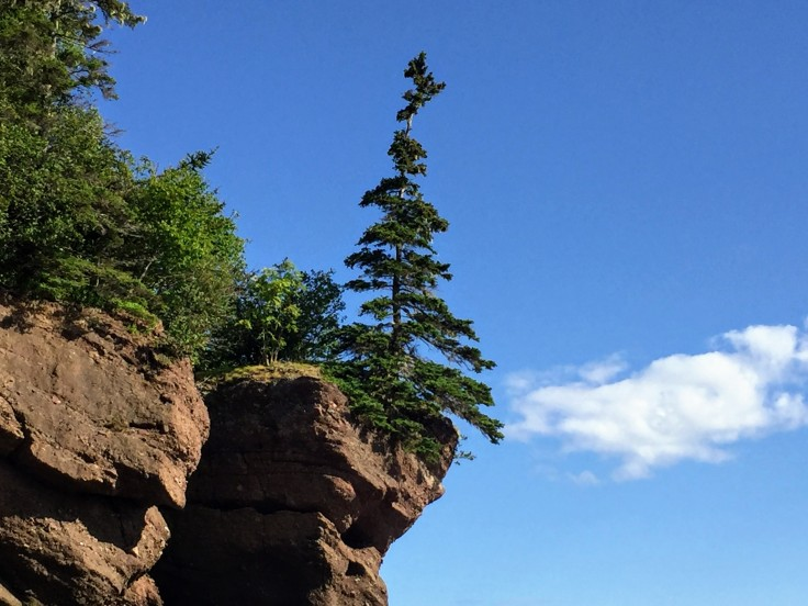 2017-07-29 Hopewell Rocks 15