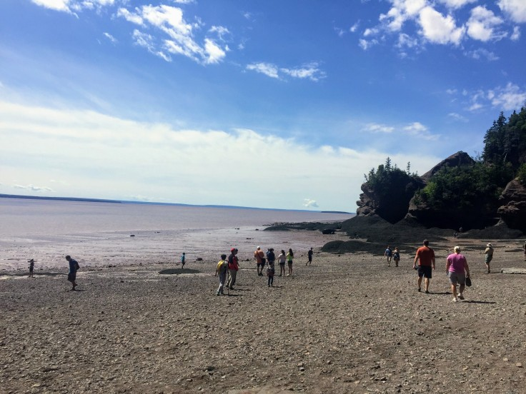 2017-07-29 Hopewell Rocks 18