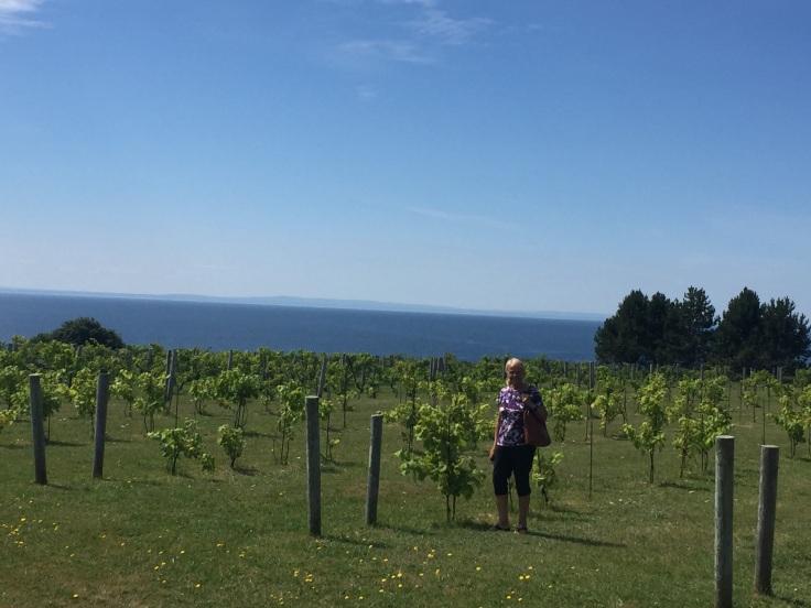 2017-08-11 Rosignol Winery 04