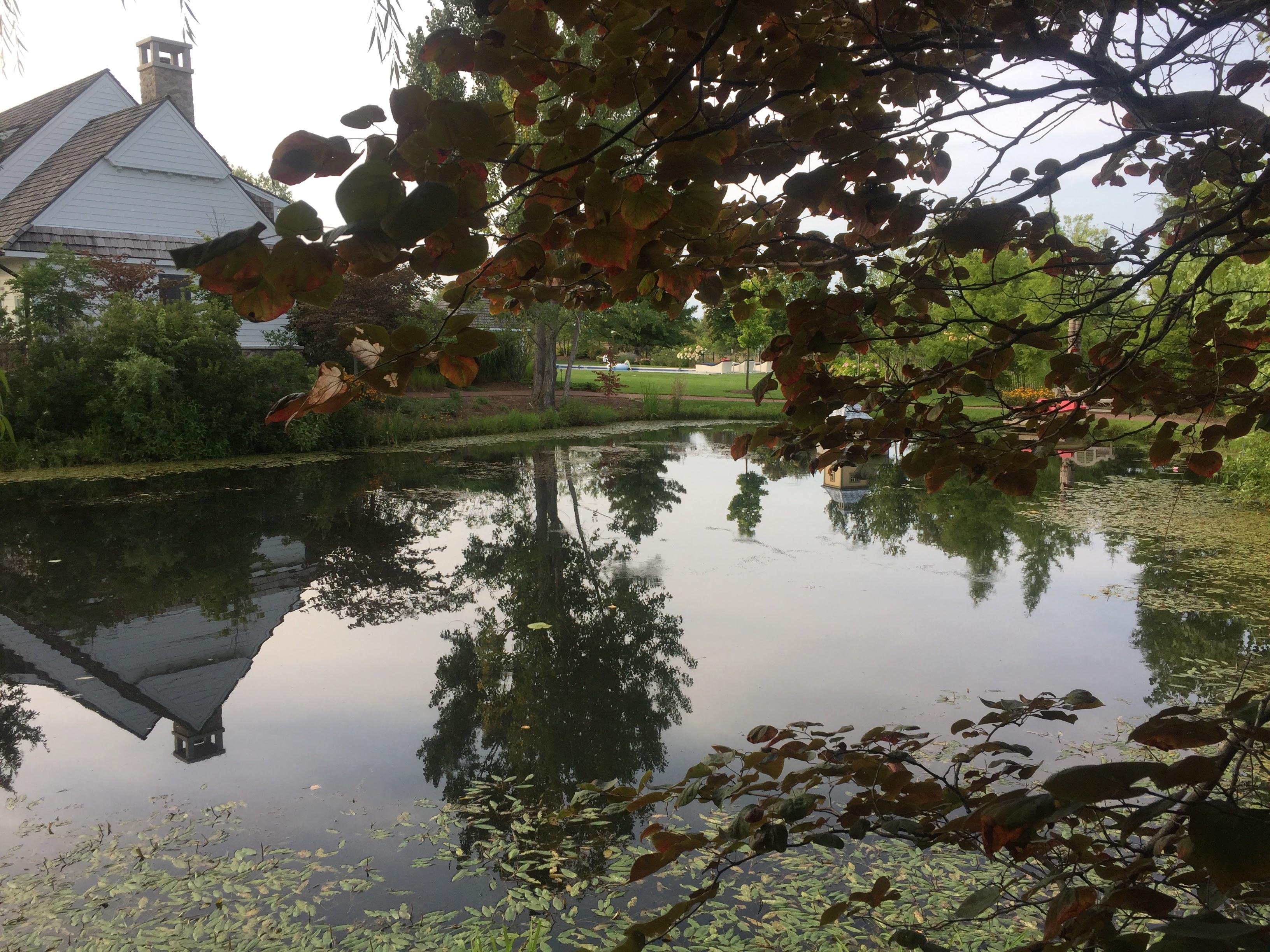 2017-08-26 McAnoy - Pond