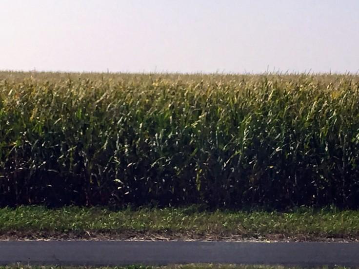 2017-09-13 Minnesota Farms 02