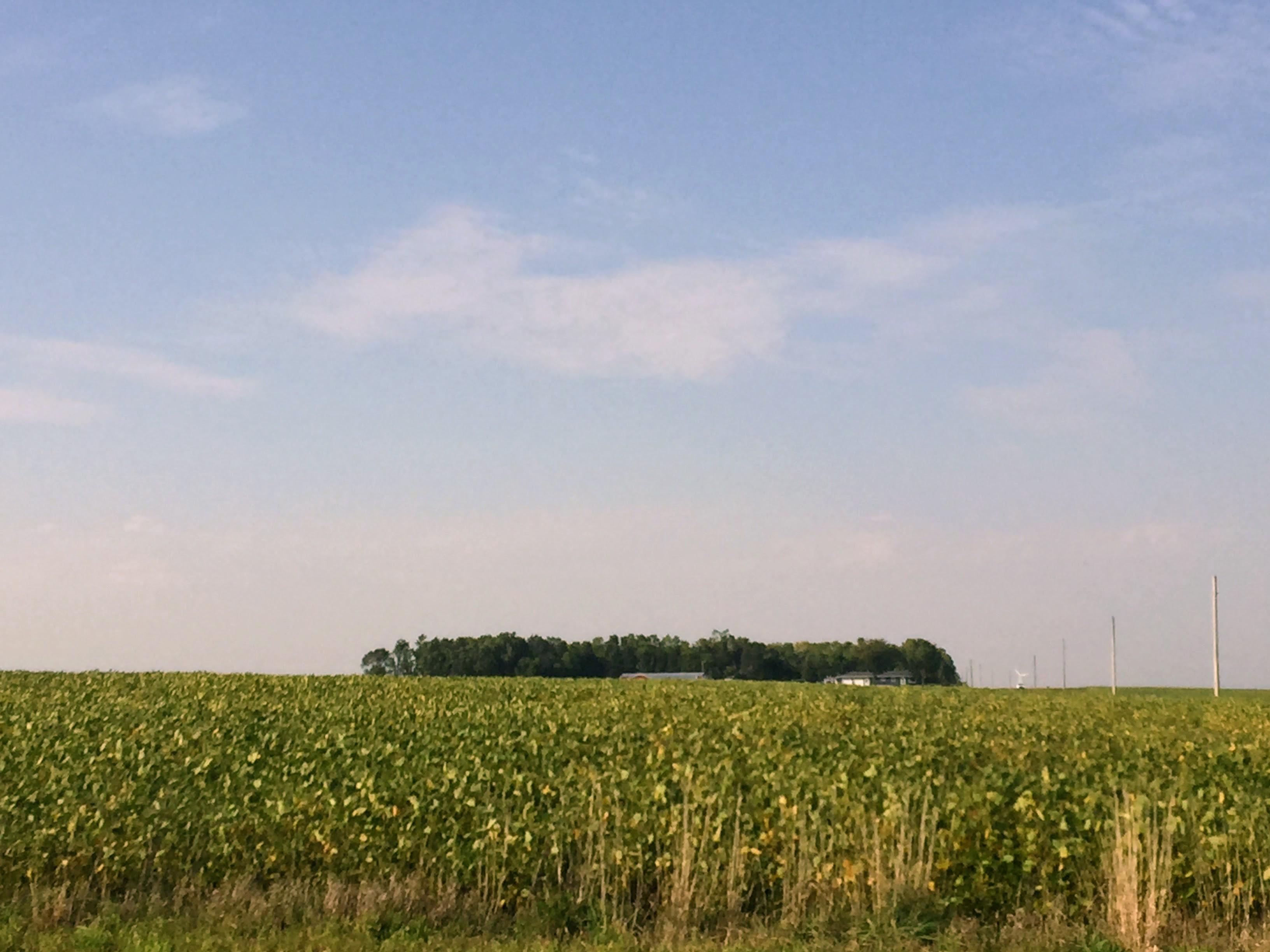 2017-09-13 Minnesota Farms 05