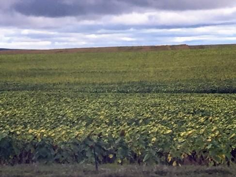 2017-09-16 SD 06 Crops