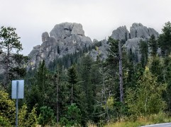 2017-09-17 Black Hills 03 Needles