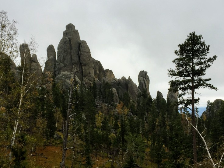 2017-09-17 Black Hills 06 Needles