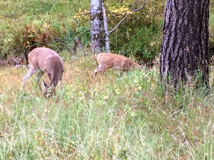 2017-09-17 Black Hills 08 Needles Deer 01