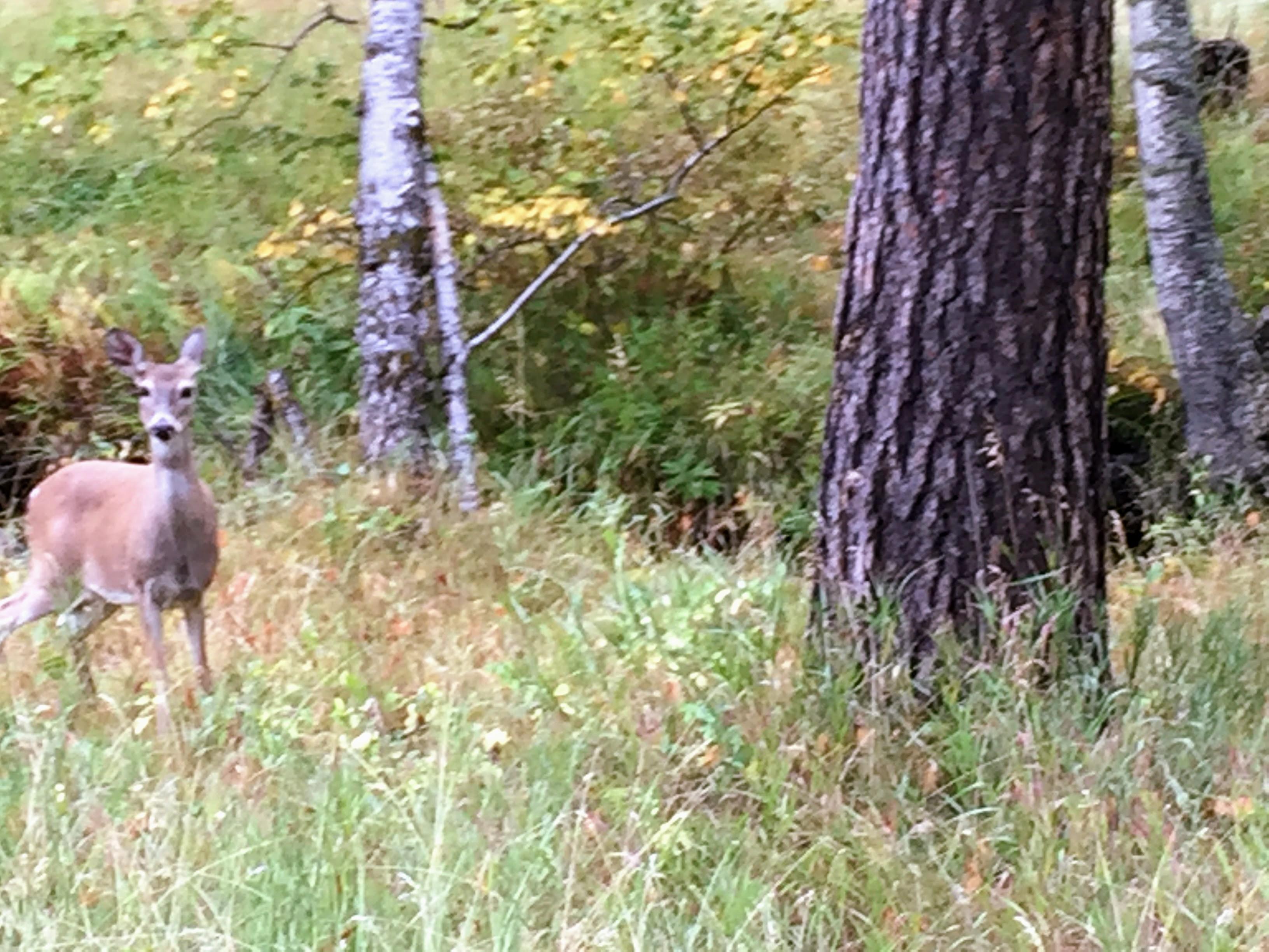 2017-09-17 Black Hills 08 Needles Deer 02