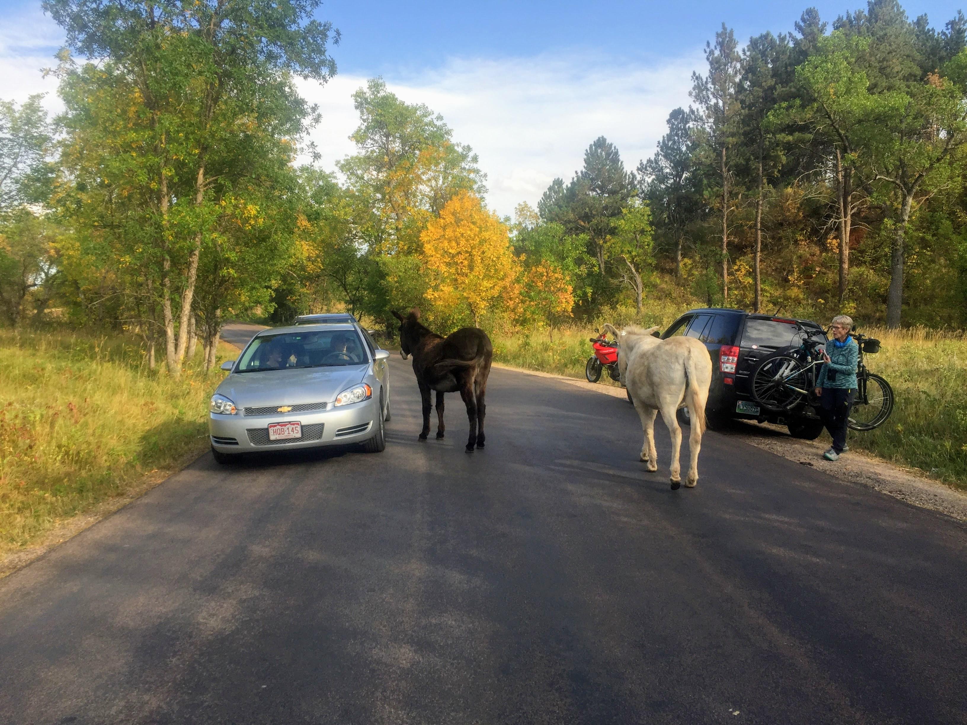 2017-09-17 Black Hills 32 Custer Wildlife 02 Donkey
