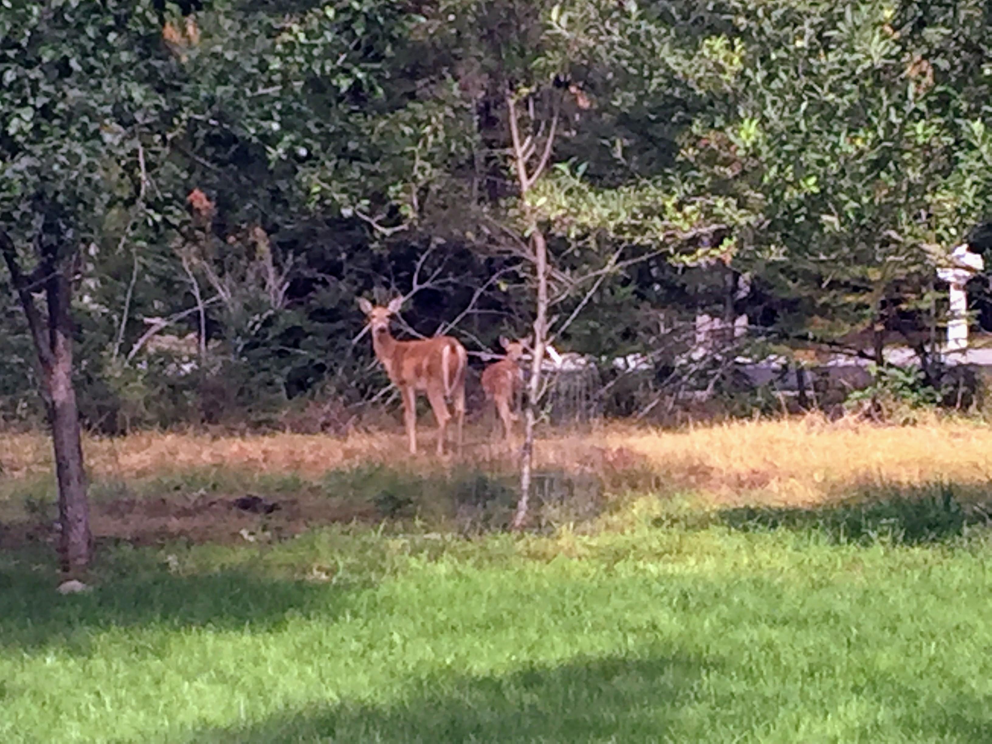 2017-09-22 Idaho 01 Walters Deer