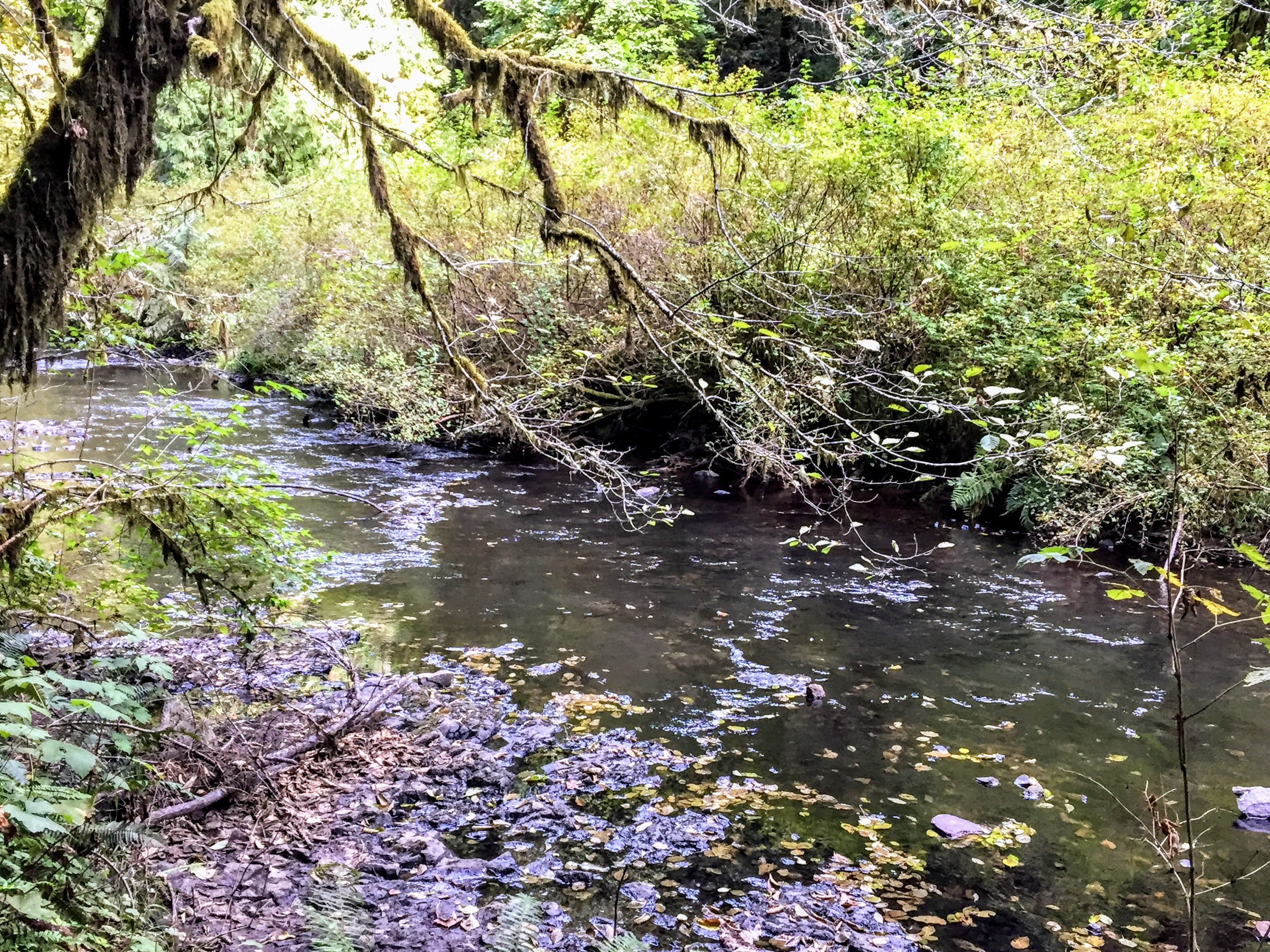 2017-10-01 Oregon 01 Silver Falls 31