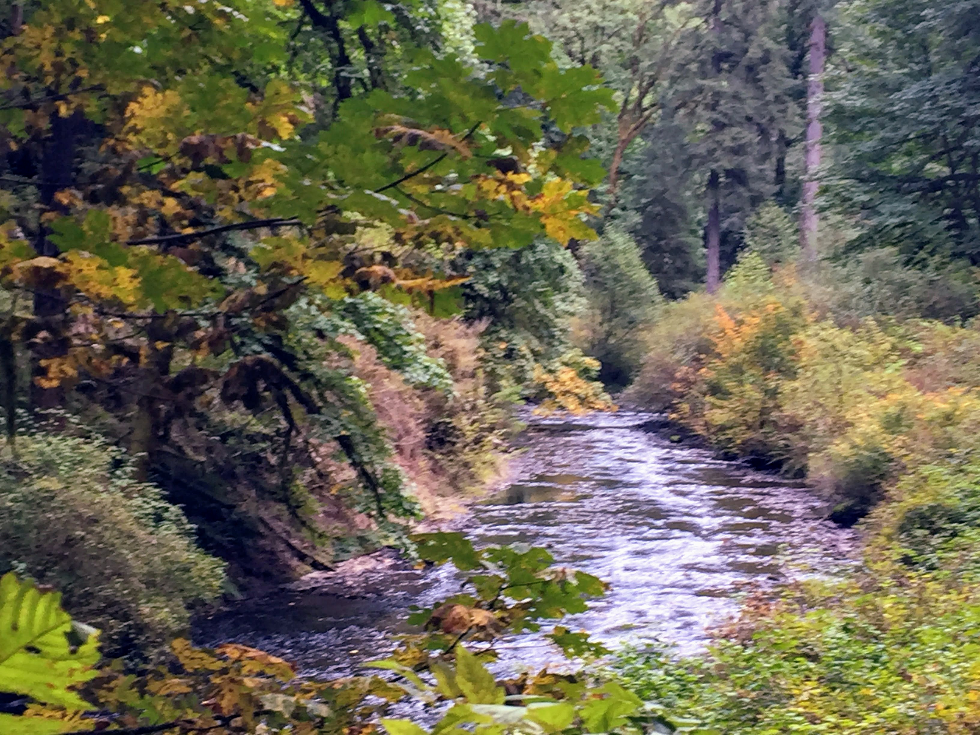 2017-10-01 Oregon 01 Silver Falls 32