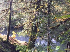 2017-10-02 Oregon 02 Views 03
